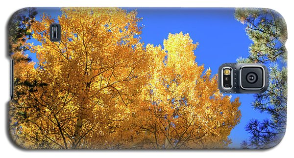 Arizona Aspens In Fall 2 Galaxy S5 Case