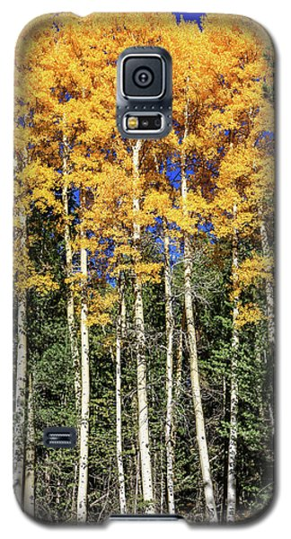 Arizona Aspens In Fall 3 Galaxy S5 Case