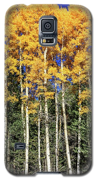 Arizona Aspens In Fall 3 Galaxy S5 Case
