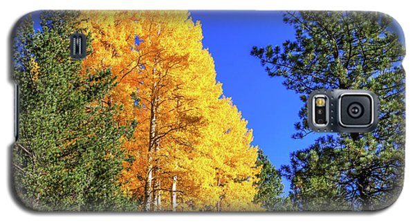 Arizona Aspens In Fall 4 Galaxy S5 Case