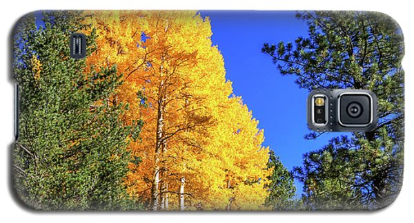 Arizona Aspens In Fall 4 Galaxy S5 Case