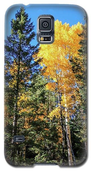 Arizona Aspens In Fall 5 Galaxy S5 Case