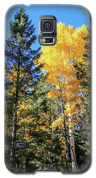Arizona Aspens In Fall 5 Galaxy S5 Case
