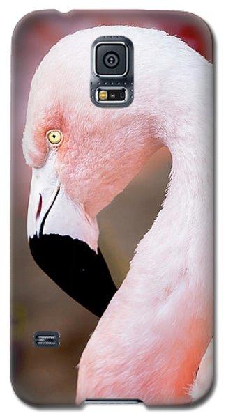 The Flamingo, Animal Decor, Nursery Decor, Flamingo Gifts, Flamingo Phone Case,  Galaxy S5 Case
