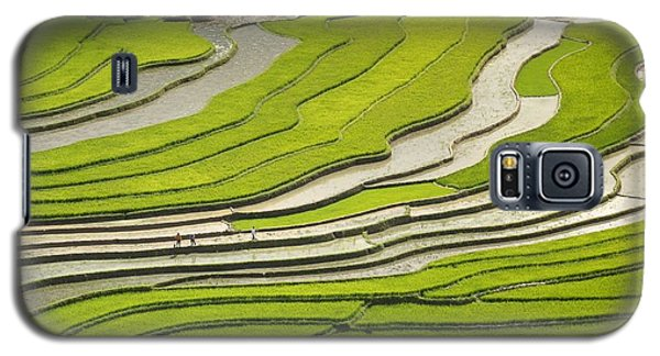 Asian Rice Field Galaxy S5 Case