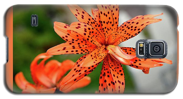 Asian Tiger Lily Galaxy S5 Case