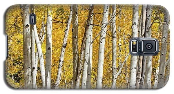 Aspen Autumn Galaxy S5 Case