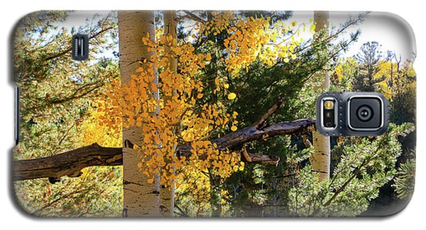 Aspen Tree Close Galaxy S5 Case