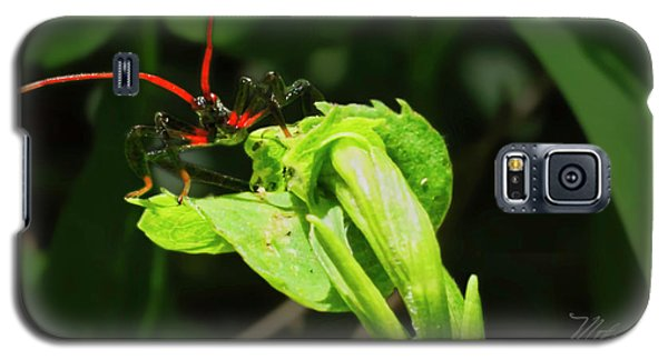 Assassin Bug Galaxy S5 Case