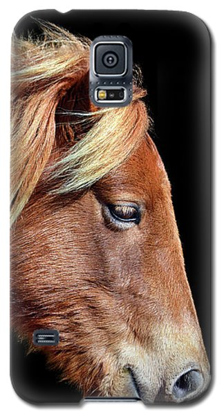 Assateague Pony Sarah's Sweet Tea Portrait On Black Galaxy S5 Case