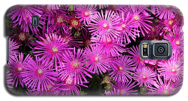 Atlanta Botanical Garden - Ice Plants Galaxy S5 Case
