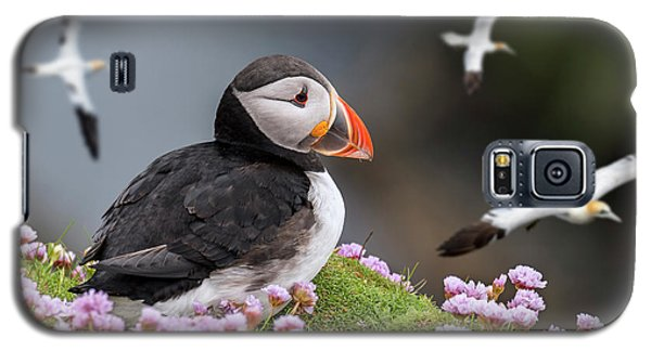 Atlantic Puffin And Soaring Gannets Galaxy S5 Case