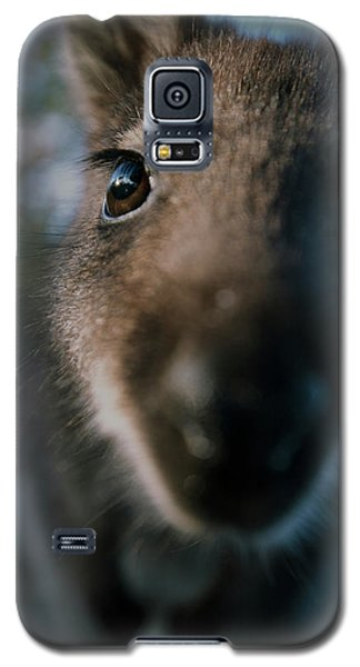 Australian Bush Wallaby Outside During The Day. Galaxy S5 Case