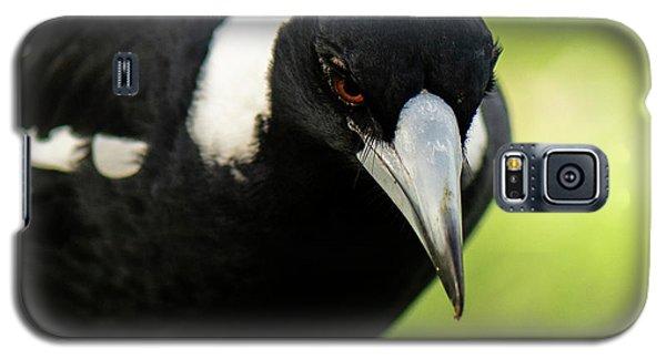 Australian Magpie Outdoors Galaxy S5 Case