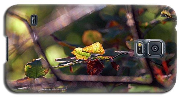 Autumn Beginnings Galaxy S5 Case