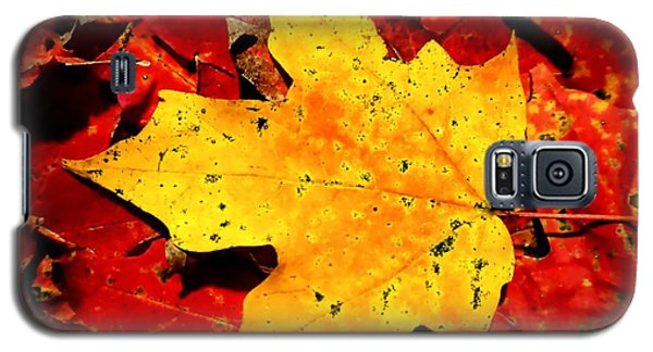 Autumn Beige Yellow Leaf On Red Leaves Galaxy S5 Case