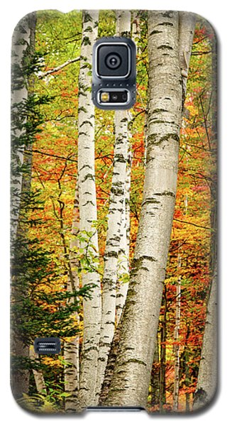 Autumn Birch Galaxy S5 Case