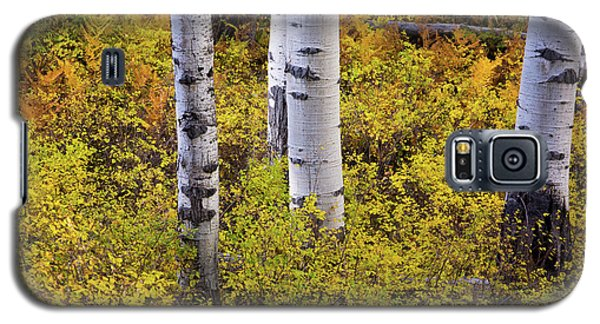 Autumn Contrasts Galaxy S5 Case