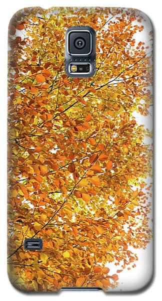 Autumn Explosion 2 Galaxy S5 Case