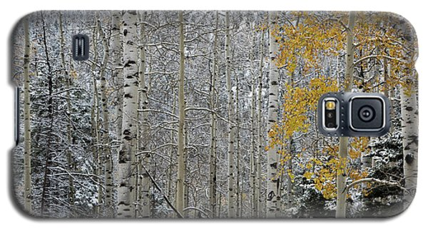 Autumn Gives Way To Winter Galaxy S5 Case