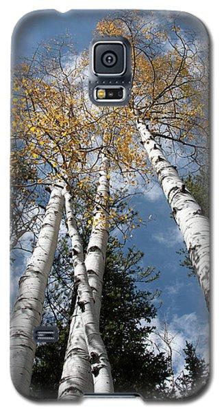 Autumnal Aspen Galaxy S5 Case
