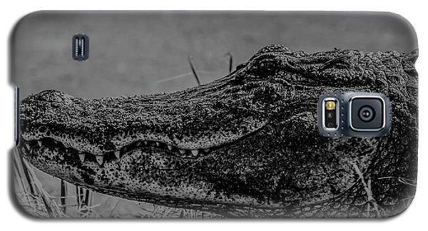 B And W Gator Galaxy S5 Case