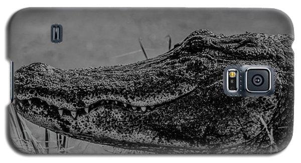 B And W Gator Galaxy S5 Case