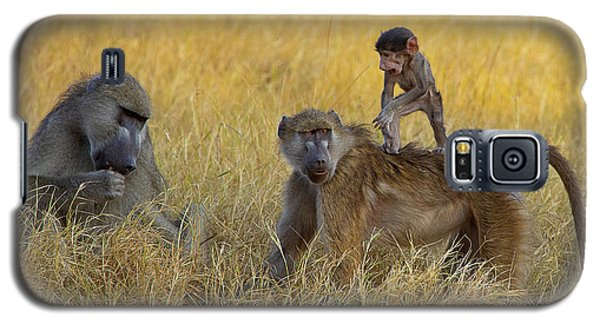 Baboons In Botswana Galaxy S5 Case