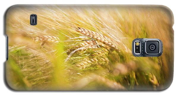 Background Of Ears Of Wheat In A Sunny Field. Galaxy S5 Case