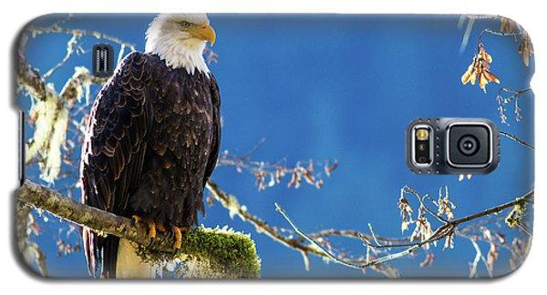 Backlit Bald Eagle In Squamish Galaxy S5 Case