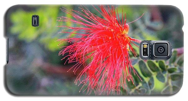 Baja Fairy Duster Galaxy S5 Case