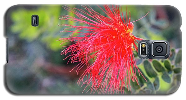 Baja Fairy Duster Galaxy S5 Case