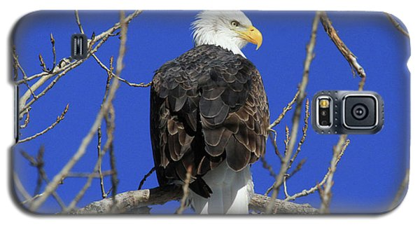 Bald Eagle And Blue Sky Galaxy S5 Case
