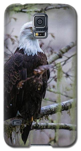 Bald Eagle In Rain Forest Galaxy S5 Case