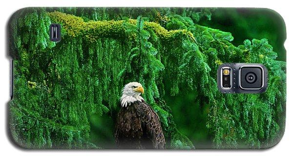 Bald Eagle In Temperate Rainforest Alaska Endangered Species Galaxy S5 Case