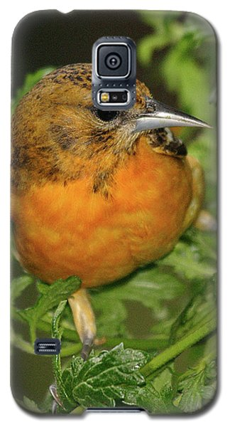 Baltimore Oriole Galaxy S5 Case