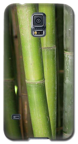 Bamboo Stalk 4057 Galaxy S5 Case