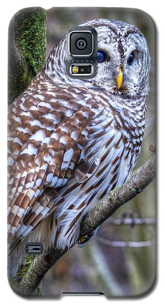 Barred Owl Galaxy S5 Case