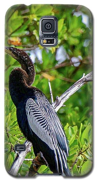 Beautiful Anhinga Galaxy S5 Case