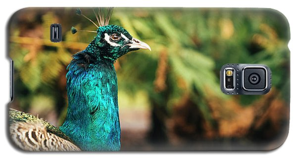 Beautiful Colourful Peacock Outdoors In The Daytime. Galaxy S5 Case