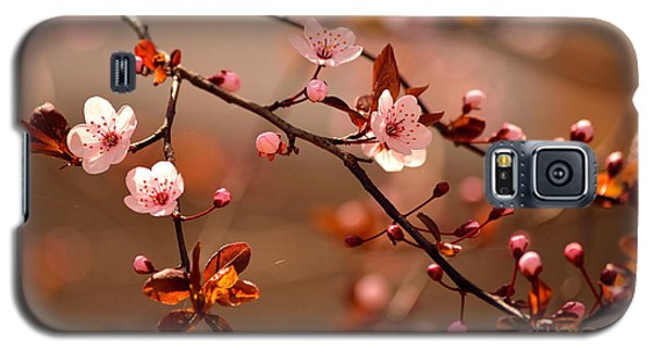 Branch Galaxy S5 Case - Beautiful Flowering Japanese Cherry - by Montypeter