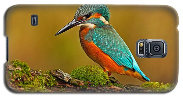 Branch Galaxy S5 Case - Beautiful Kingfisher With Clear Green by Ondrej Prosicky