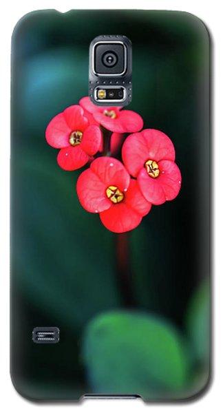 Beautiful Summer Flowers Galaxy S5 Case