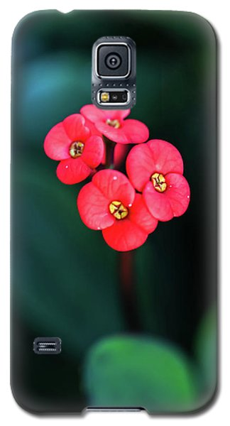 Beautiful Summer Flowers Galaxy S5 Case