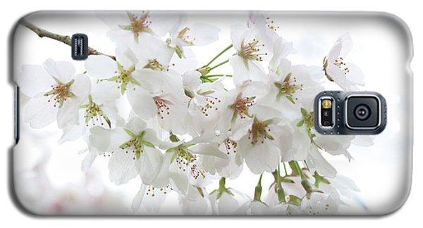 Beautiful White Cherry Blossoms Galaxy S5 Case
