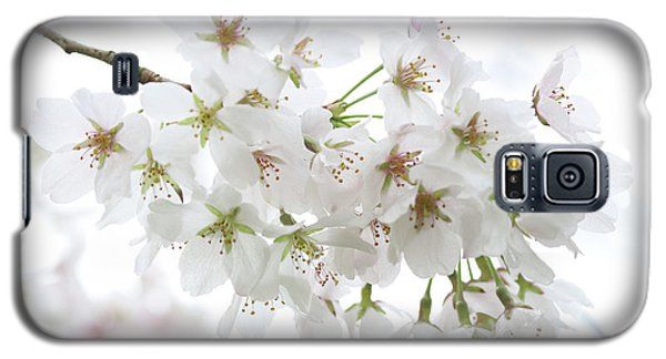 Beautiful White Cherry Blossoms Galaxy S5 Case