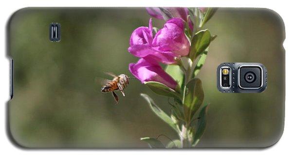 Bee Flying Towards Ultra Violet Texas Ranger Flower Galaxy S5 Case