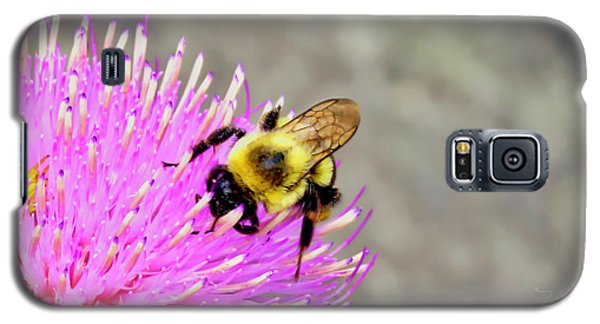 Bee On Pink Bull Thistle Galaxy S5 Case