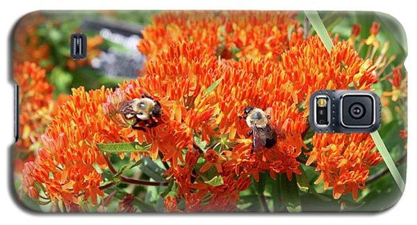 Bees Galaxy S5 Case