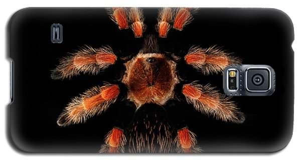 Big Spider Brachypelma Boehmei Galaxy S5 Case
